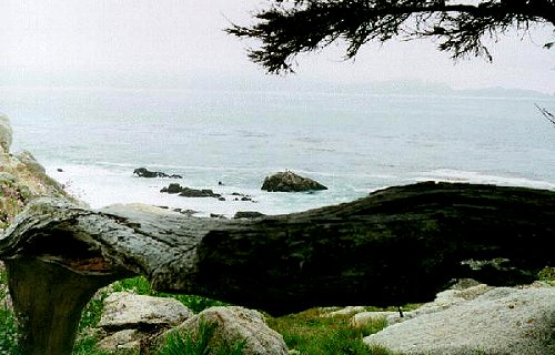 Natural Barrier created by fallen tree on the 17-Mile Drive, Monterey, California